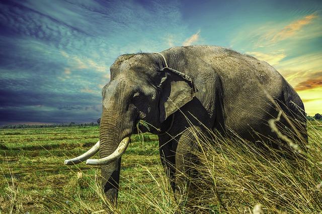 คำไวพจน์ ช้าง
