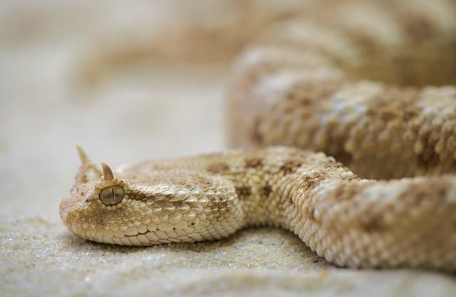 คำไวพจน์ งู